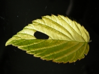 10_leaf-linkweb.jpg