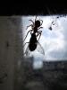 1_spiderweb-size.jpg