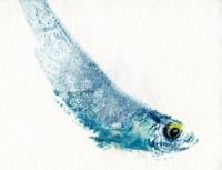 3_minifish-print138.jpg
