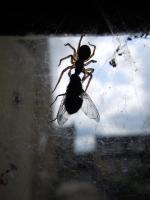 51_spiderweb-size.jpg