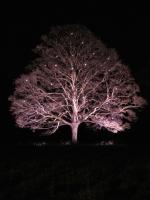 51_tree.jpg